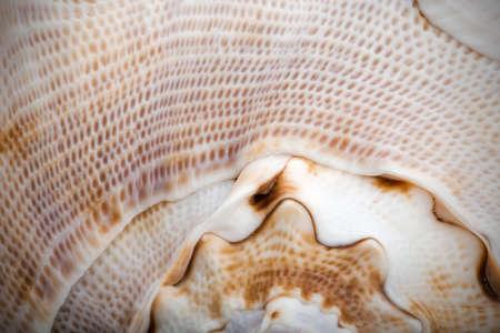 echinoderm: spiral shell, close up Stock Photo