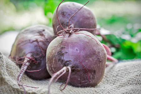 beets: Beets, ripe root crops
