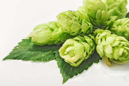 tendrils: Hop isolated on white
