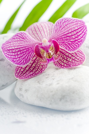 beautiful pink orchid with white stones on a harmony scene photo