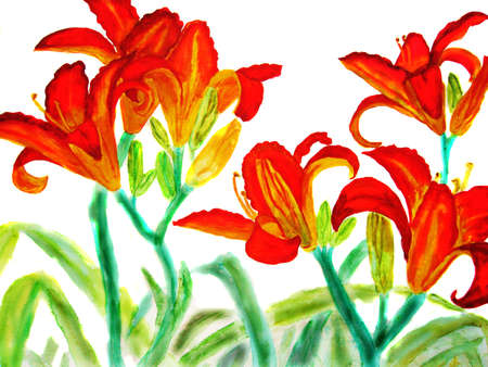 Hand drawn picture, watercolour - few red lilies. photo