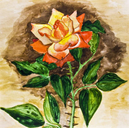 Hand painted picture, watercolours - rose mixed yellow and red colours, kind  photo