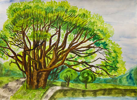 Hand painted picture, watercolours - summer landscape with willow tree in park  photo