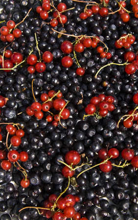 bilberry: Background from redcurrant and bilberry, vertical orientation. Stock Photo
