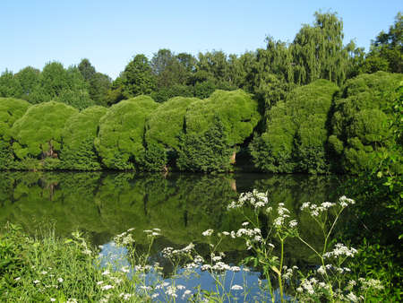 Summer landscape with lake, willow trees and white wild flowers on banks. Recorded in Izmaylovskiy park in Moscow. Stock Photo - 12867862