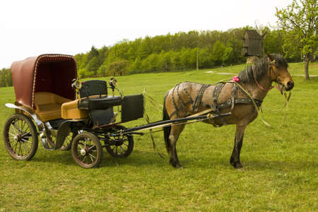 Brown horse with retro carriage on green field, forest and windmill behind. Stock Photo
