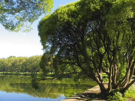 Summer landscape - willow trees and lake, recorded in Izmaylovskiy park  in Moscow  Stock Photo - 13068037