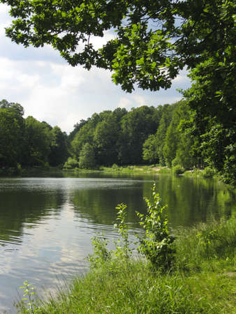 Lake in park, forest around, vertical view. Recorded in Izmaylovskiy park in Moscow. Stock Photo - 13068036