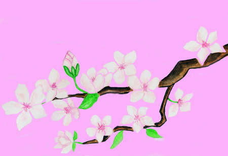 Branch with white flowers on pink background, flowers hand painted gouache, background computer design. photo