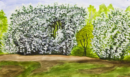Hand painted picture, watercolours - spring landscape with bird cherry tree in blossom. photo