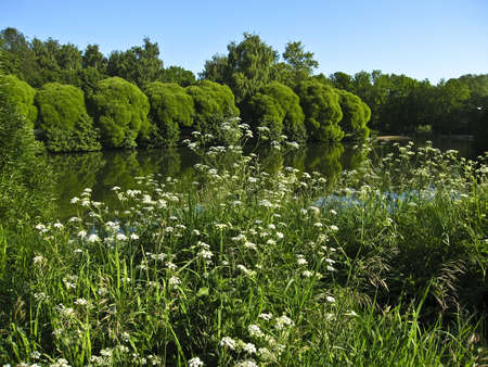 izmaylovskiy: Summer landscape with lake, trees and wild white flowers on banks. Recorded in Izmaylovskiy park in Moscow.