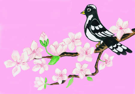 Bird on branch with white flowers on pink background, hand drawn picture, watercolours, background computer design. photo