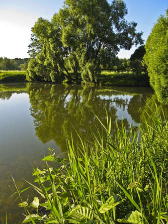 Summer landscape with water - big willow tree near lake, reflection in water, grass in front view. Stock Photo - 13991408