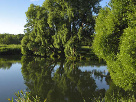 Summer landscape - lake and willow trees on bank, recorded in Izmaylovskiy park in Moscow. photo