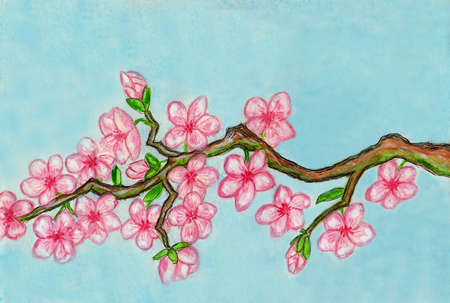 Hand painted picture, watercolours, in tradition of ancient Chinese art - white bird on branch with pink cherry flowers. photo