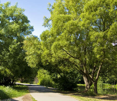 Summer landscape - road, willow trees near lake in park. Recorded in Izmaylovskiy park in Moscow. photo
