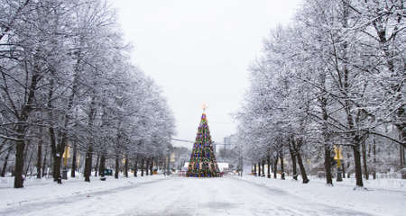 frac12: Moscow, Russia - January 02, 2012: Christmas tree and alley of snow-covered trees, park Sokolniki. Stock Photo