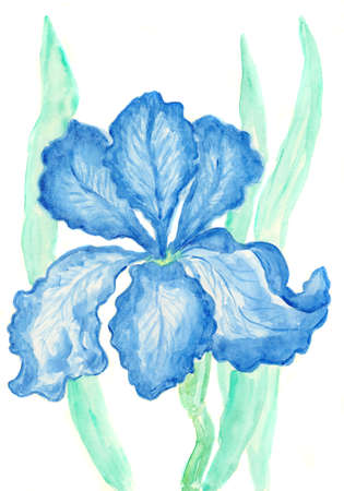 Light blue iris, hand painted picture, watercolours. photo