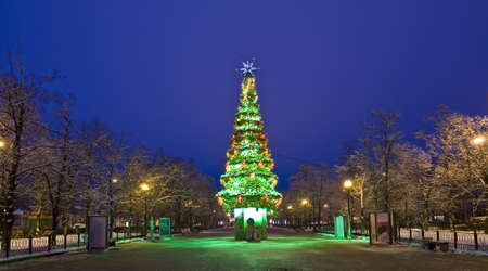 Moscow, Russia - January 02, 2012: Christmas tree in park Sokolniki.