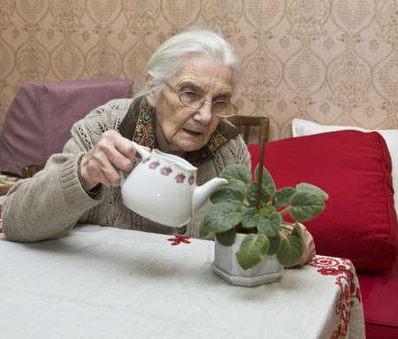 Old lady (European) watering viola flower at home.