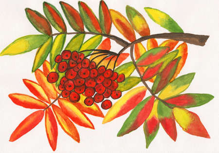 ashberry: Hand painted picture, gouache - ashberry with leaves.