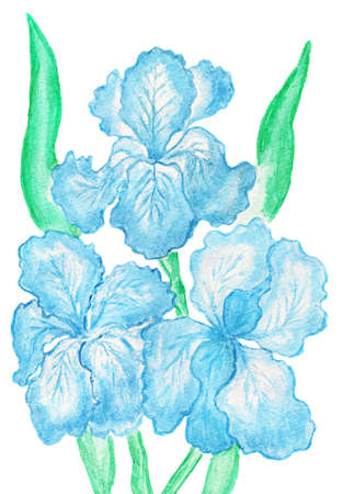 Hand painted picture, watercolours - three blue irises. photo