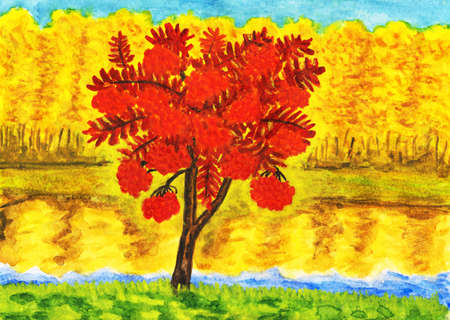 Hand painted picture, watercolours - autumn landscape with red ash tree and yellow forest  photo