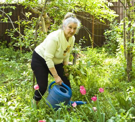 Senhora idosa no jardim regando flores de tulipas Banco de Imagens