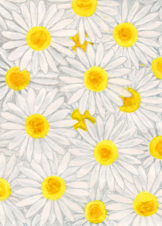 oxeye: White camomiles (ox-eye daisy), hand painted picture, gouache. Stock Photo