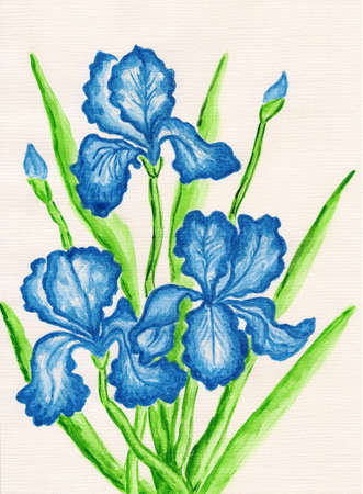 Three dark blue irises, hand painted picture, watercolours. photo