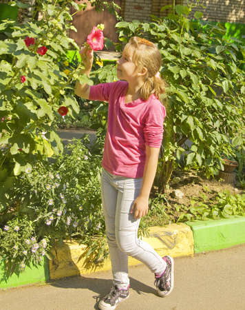 Schoolgirl Caucasian standing in garden looking at red mallow. photo