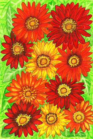 orange gerbera: Background from gerbera flowers of red, orange and yellow colours on green leaves, hand painted picture, watercolours.