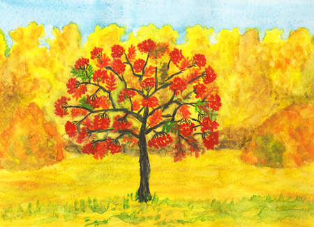 Hand painted picture, watercolours - autumn landscape: ash tree with red berries and yellow forest. photo
