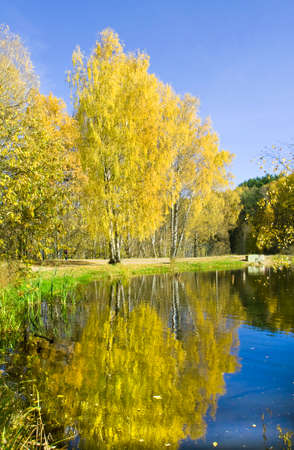 izmaylovskiy: Autumn landscape - golden birch trees on bank of lake with reflection in water. Recorded in Izmaylovskiy park in Moscow, Red lake.