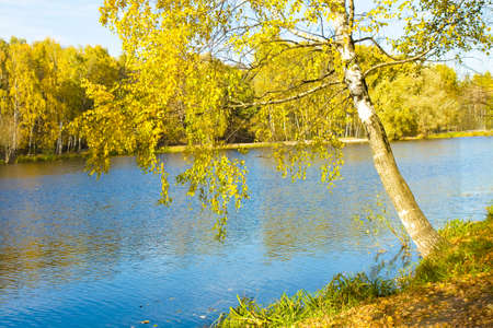 izmaylovskiy: Autumn  landscape - birch tree near lake, forest on other bank, trees with yellow leaves. Recorded on Red lake in Izmaylovskiy park in Moscow.