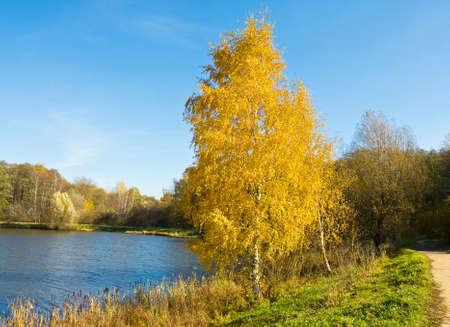 izmaylovskiy: Autumn landscape with yellow birch tree near lake, recorded on Swan lake in Izmaylovskiy park in Moscow. Stock Photo