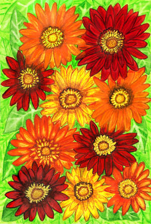 orange gerbera: Background from gerbera flowers of red, orange and yellow colours on green leaves, hand painted picture, watercolours. Size of original 29,5 x 20,5 sm.