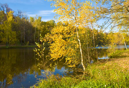 recorded: Autumn landscape - little golden birch tree on bank of lake, forest on other bank, recorded on Red lake in Izmaylovskiy park in Moscow. Stock Photo