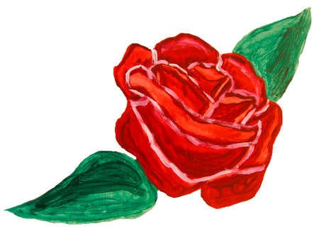raspberry pink: Oil painting, one big red rose on white background.