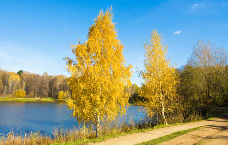 izmaylovskiy: Autumn landscape with two golden birches on bank of lake, recorded on Swan lake in Izmaylovskiy park in Moscow.