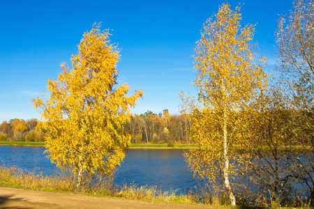 recorded: Autumn landscape - two yellow birch trees near lake, recorded on Swan lake in Izmaylovskiy park in Moscow. Stock Photo