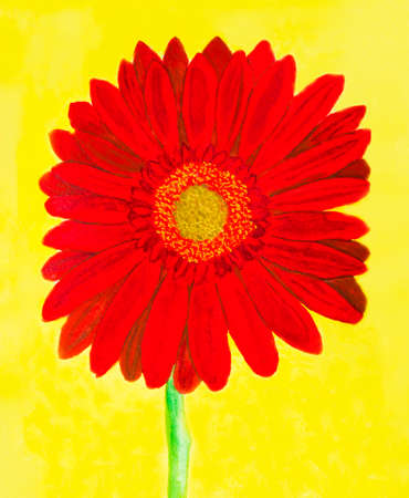 creative arts: Red gerbera flower on yellow background, watercolor painting. Stock Photo