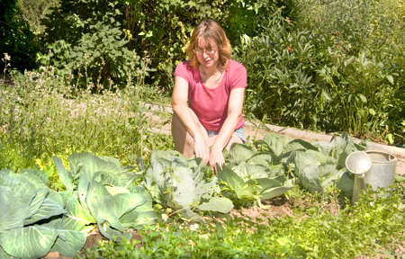 age forty: European woman weeding cabbage in garden. Stock Photo