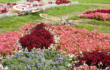 recorded: Original flowerbed with coleus and begonia flowers, recorded on Exhibition of flowerbeds in park Kuzminki, Moscow, August of 2013 year. Stock Photo