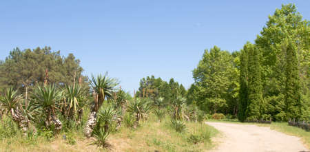 helen: Summer landscape with palm trees, recorded in Botanic garden of Saints Constantine and Helen resort, Bulgaria Stock Photo