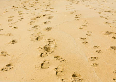 footsteps: Footsteps of people and dogs on sandy beach. Stock Photo
