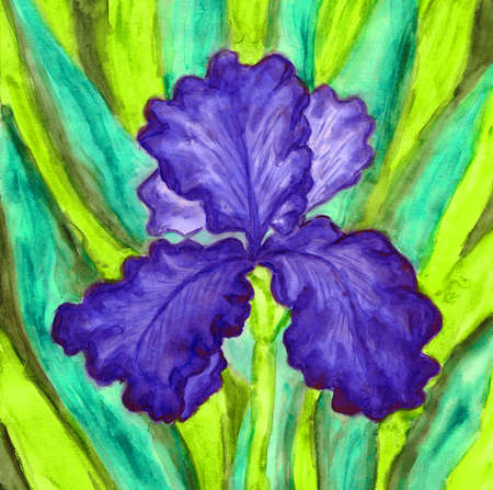 fine art painting: Hand painted picture, watercolours, iris of blir colour. Size of original 27 x 21 sm. Stock Photo