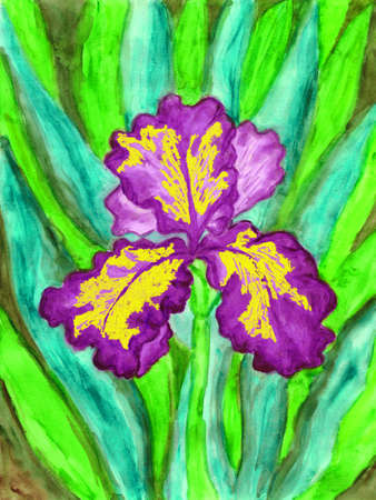 sm: Hand painted picture, watercolours, iris of violet and yellow colour. Size of original 27 x 21 sm. Stock Photo