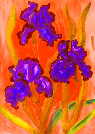 violet red: Watercolor painting, three violet irises on red background. Stock Photo