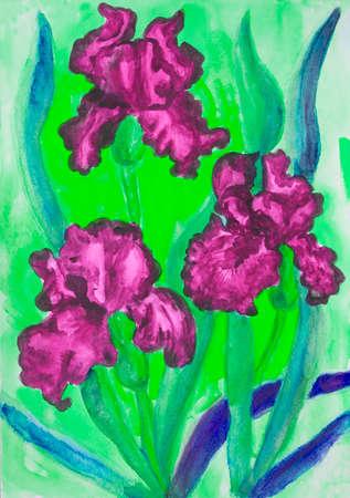 crimson: Watercolor painting, three crimson irises on yellow background.